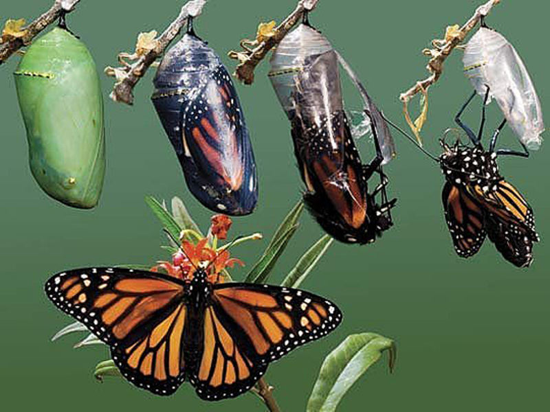 Story: A man who found a cocoon of a butterfly